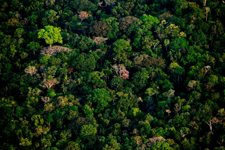 Floresta nativa no Médio Juruá.